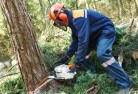 Acheron Tree cutting services 21